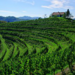Landscape of the Haloze vineyards